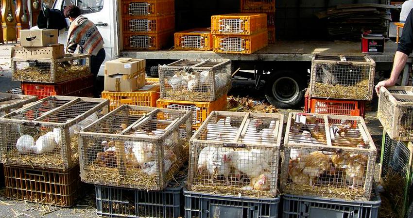 Points de ventes de la ferme avicole des Chavannes Fougerolles Haute Saone , Vosges sur les marchés de la région
